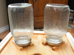 Close up of Inverted Canning Jars used to feed bees syrup over winter in Backyard Beekeeping